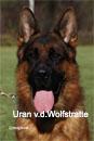 Uran v.d.Wolfstratte1